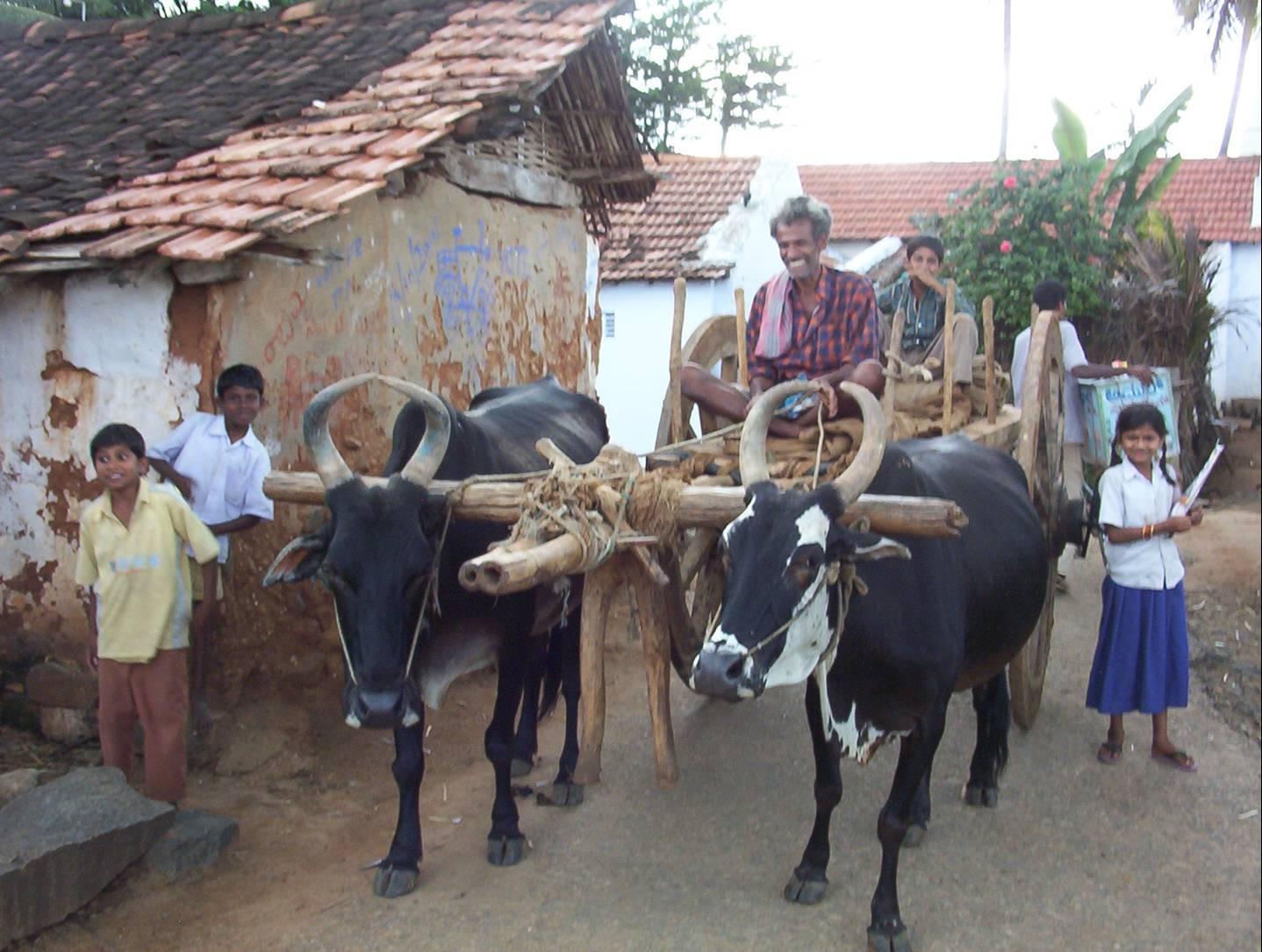 Ox cart on Main Street